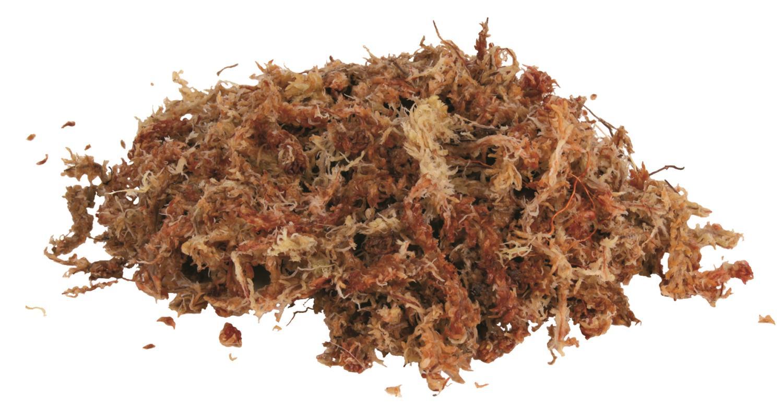 Sphagnum mose underlag for terrarium 100gr