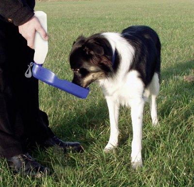 Vannflaske/skål hund 750ml